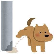 トイレ 犬